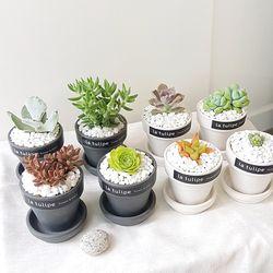예쁜감성 소형 다육식물 8종 (택1)