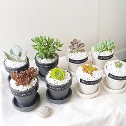 예쁜감성 소형 다육식물 8종 (택1) + 피규어추가