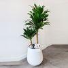 공기정화식물 콤팩타 고급화분 대형