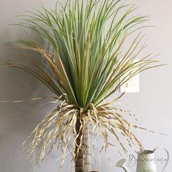 풍성하고 이국적인 멋스러움 드라코 화분 - 인테리어조화나무
