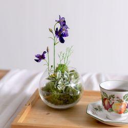DIY 테라리움 스칸디아모스 화병 공기정화식물