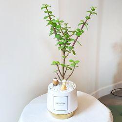 다육식물 은행목 골드화분(피규어추가)