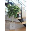 자연스럽게 늘어진 수형이 멋스러운 공기정화식물 벤자민