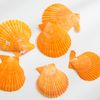 가리비 껍데기 6set(오렌지)