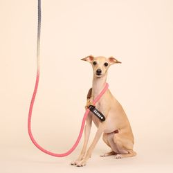 (TWO TONE) SMART LEASH PINK NAVY