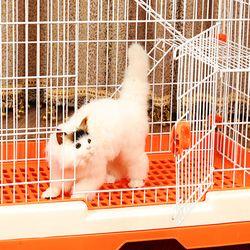 고양이 빌라 케이지 하우스 M사이즈