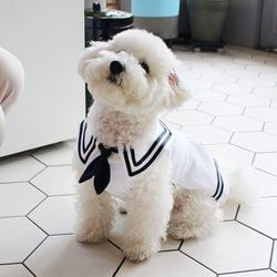 [DOG] 몽페레 마린 코디원피스 (Marine White)