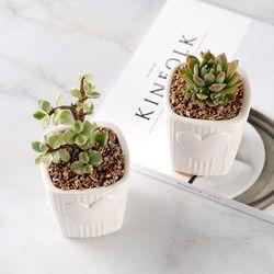 공기정화식물 미니하트화분 다육식물 15종