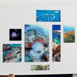 ib399-멀티액자바닷속의아름다움