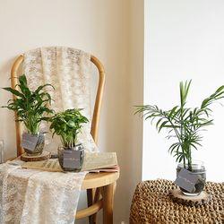 [plant] 공기정화식물 - 유리볼 수경식물set 4종(택1)