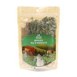 산시아 블루마운틴 캣닢과 마따따비 나무