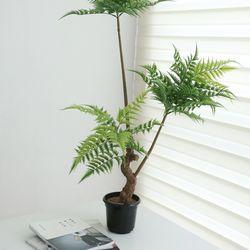 노무라인조나무