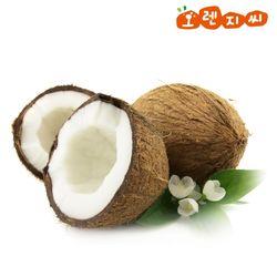 베트남 코코넛 2과(개당 1kg내외) 2kg