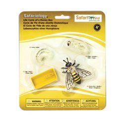 622716 꿀벌의성장과정 교육피규어
