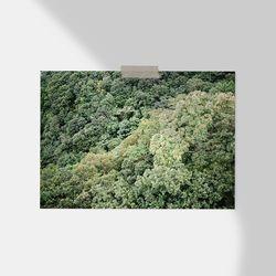 [필름감성사진] Forest