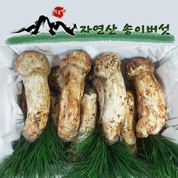 2019년 자연산 송이버섯 가정용 백두산 자연송이 1kg