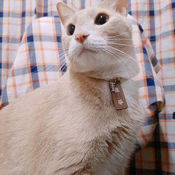 원목 주문제작 고양이강아지 인식표