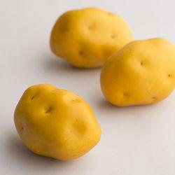 감자 모형 1P