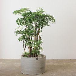 [개업축하카페인테리어]실내에서 잘 자라는 에코식물 폴리셔스