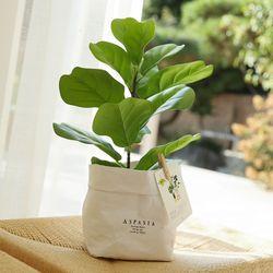 오피뉴 떡갈잎 고무나무 미니조화나무-실내인테리어