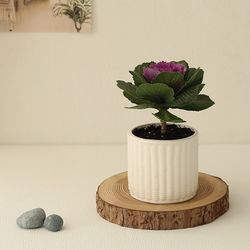 [plant] 축복해요 꽃배추 식물화분 [2color]