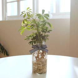 꽝손도 키우는 수경재배 실내공기정화식물 (식물:2종중 택1)