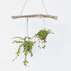 행잉가랜드 자작나무 스틱 나무가지 3p