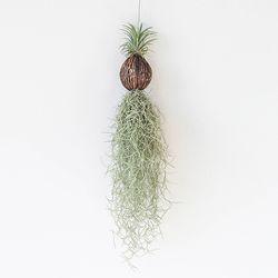 공기정화 가랜드 행잉식물 수염틸란드시아