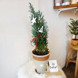 편백나무 스노화이트 민트토분(크리스마스데코추가)