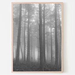 새벽의숲 사진포스터 (a4)