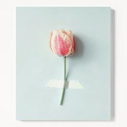 캔버스 모던 식물 꽃 인테리어 액자 튤립 한송이 [6호]