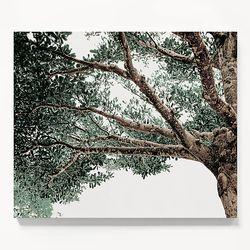 캔버스 인테리어 식물 여름 풍경 액자 나무 그늘 D [6호]