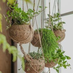 코코넛 행잉 식물 5종