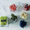 스칸디아모스 화분 미니유리화분 인테리어 공기정화식물
