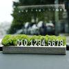스칸디아모스 화분 주차번호판 인테리어 공기정화식물