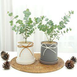 미니 소형 유칼립투스 키우기 블랙잭 반려식물 식물이좋다