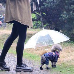 갓샵 강아지 애견 우산