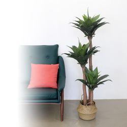 인테리어조화 인조나무 조화화분 3단 아가베 아테누아타 150