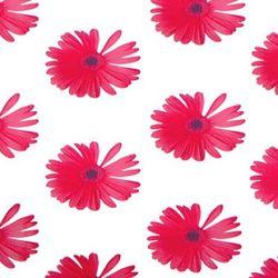 꽃무늬시트 AO-42 써니레드 (1M)