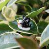 오리에 앉은 검은고양이