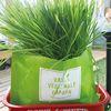 밀싹재배세트