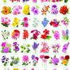 1000조각 직소퍼즐 - 플라워 컬렉션 (EU6000-0579)
