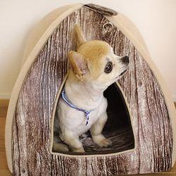 PET 돔형하우스 +  방석 Set