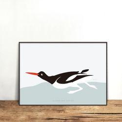 OYSTER CATCHER [330x430mm]