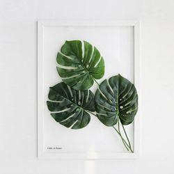 투명 식물 인테리어 액자-몬스테라 A3