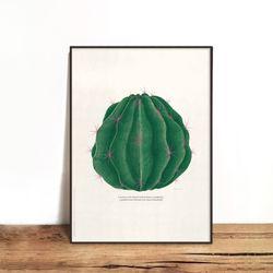 Fero Cactus 01 [330x430mm]
