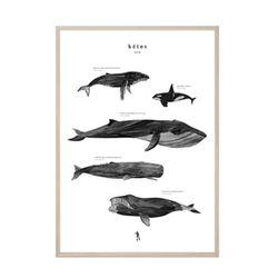 수입작가아트포스터- KETOS (포스터 ONLY)