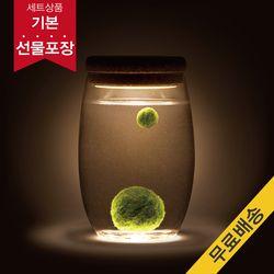 [빛가든]컵가든 마리모