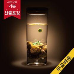 [빛가든]청개구리 마리모