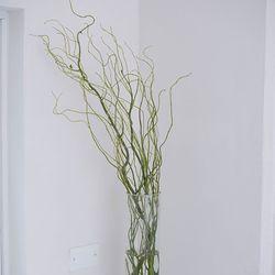 곱슬버들 그린 인테리어 식물 생화